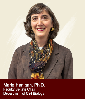 Marie Hanigan - College of Cell Biology